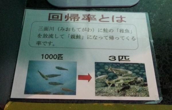 鮭の回帰率