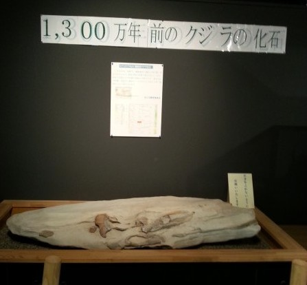 くじらの化石